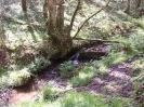 Exmoor Scenery_12