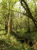 Exmoor Scenery_1