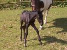 Foal_1