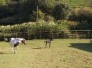 Foal_2