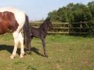 Foal_3