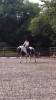 Interdressage_3