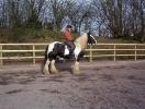 School Horses_1